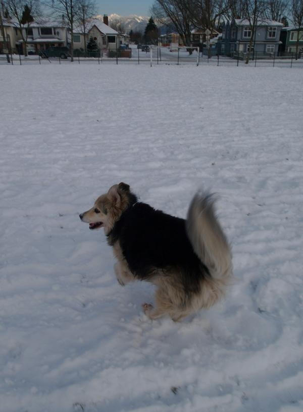 shea-on-snow
